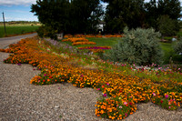 The Flower Lady - The Most Beautiful Corner in Idaho